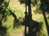 Seilbahn - Schatten