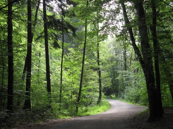 Dresdner Heide